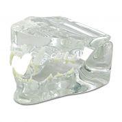 Kleintier-Zahnmodelle