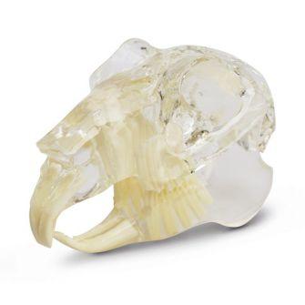 Paket: Zahnsanierungs- und Fixationsstand für Nager + Zahnmodell Nager