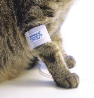 Blutdruckmessung bei Hunden und Katzen