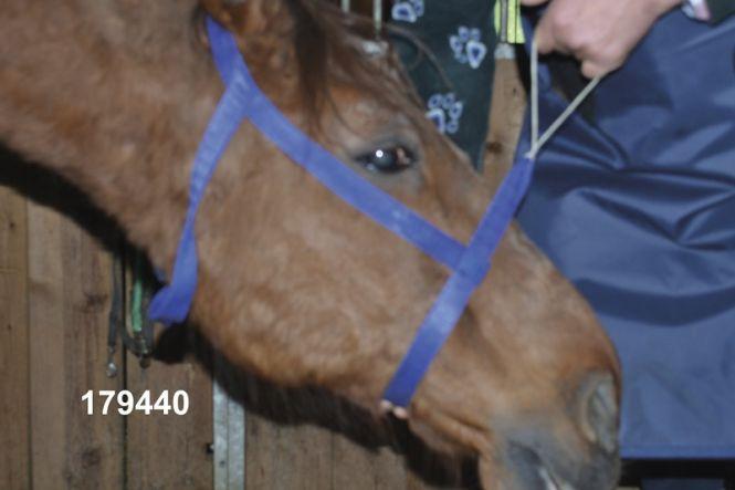 Röntgenhalfter für den Pferdekopf