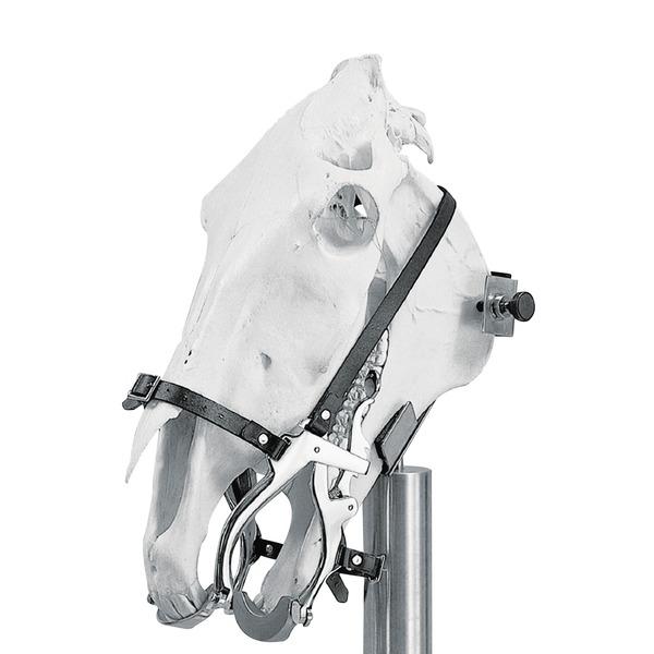 Maulgatter für Pferde HAUSSMANN/CLIMAX